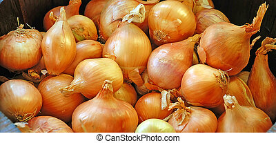 Orange Onions Background