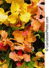 orange, orchidées
