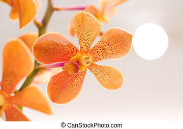 Orange Orchid For the background
