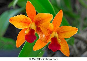 orange, orchids.