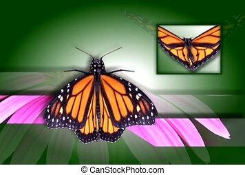 orange, papillon, s'agiter, ailes