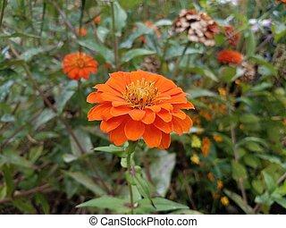 orange part, vert, pétales, fleur
