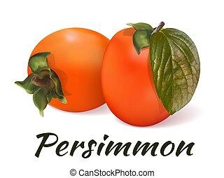 Orange persimmon vector