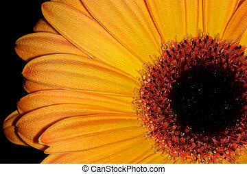 orange, petals-2