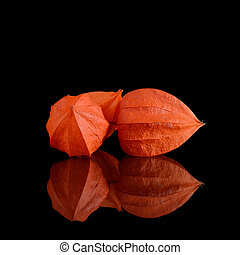 Orange Physalis on a black background