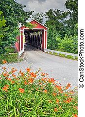 orange, pont couvert, daylilies