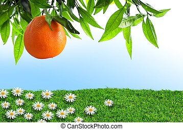 orange, printemps