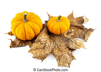 orange pumpkin stands on dry maple leaves isolated background