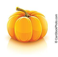 orange pumpkin vegetable vector illustration isolated on white background