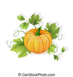 Orange pumpkin vegetable with green
