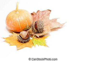 orange pumpkin with chesnuts