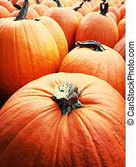 Orange pumpkins at the autumn market