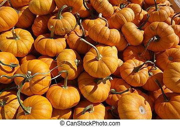 Orange Pumpkins Background