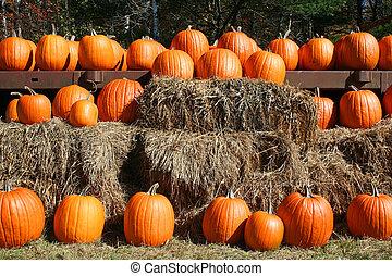 Orange pumpkins in rows on hay bale
