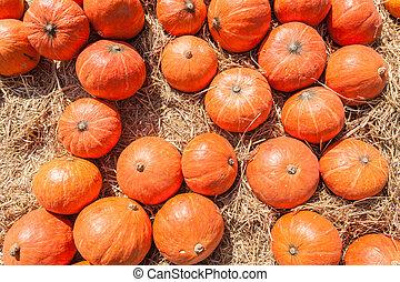 Orange pumpkins on straw