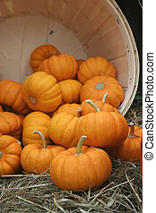 orange pumpkins tumble from wooden barrel