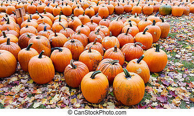 orange pumpkins with fall leaves
