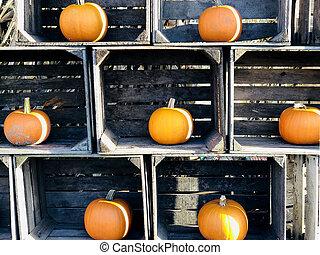 Orange pumpkns in wooden crates