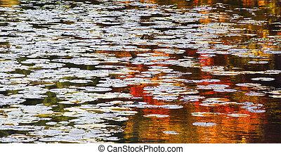Orange Red Lily Pads Water Reflections Van Dusen Gardens