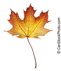 Orange Red Maple Leaf