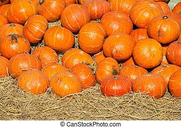 orange-red pumkins
