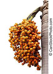 Orange ripe Betel nut palm fruit