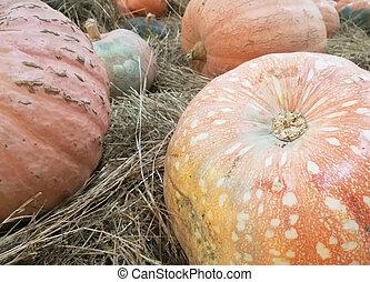 orange ripe pumpkins lie in the hay with maple leaves