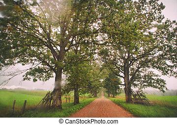 Orange road between oaks through wet glass - Latvia....