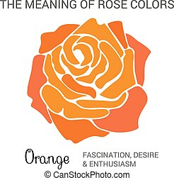 Orange rose infographics, vector illustration isolated on...