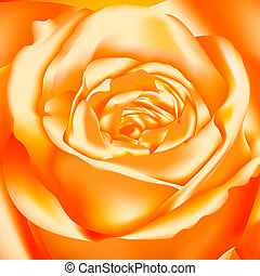 Orange Rose, vector