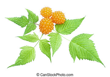 Closeup of fresh Rubus spectabilis orange salmonberry and green leaves isolated on white