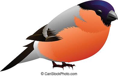 orange, schwarzer vogel, geführt