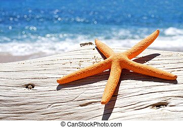 orange seastar on an old washed-out tree trunk in the beach...