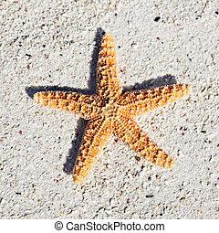 orange seastar on sand on a caribbean beach
