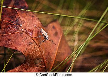 Orange Small Milkweed Bug