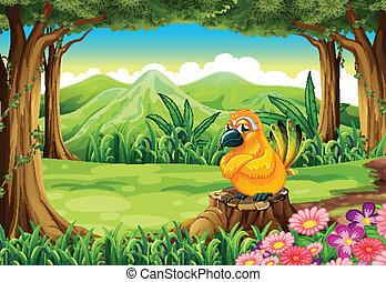 orange, souche, oiseau, au-dessus, forêt