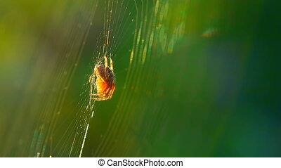 Orange spider sits on center of the web.