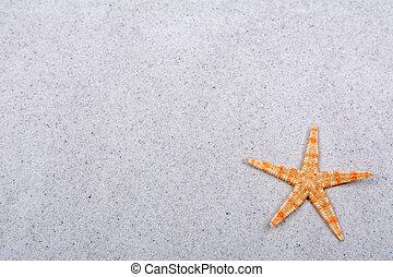 Orange starfish on a sand background
