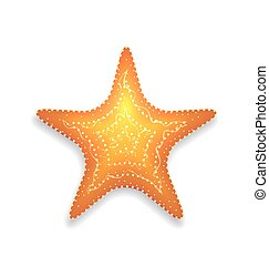 Orange starfish with shadow isolated on white background