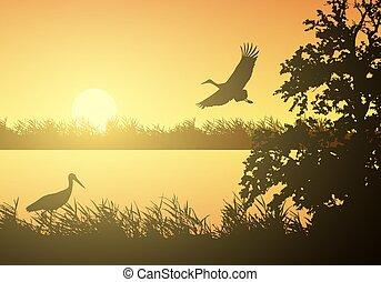 orange, steigend, landschaftsbild, vektor, unter, abbildung, sumpfgebiet, fluß, realistisch, oberfläche, birds., morgen, see, oder, sonne, storch, himmel fliegen, wasser