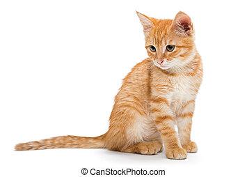 Orange, striped, little kitten isolated on white background.