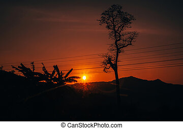 orange sunrise on red sky background with tree