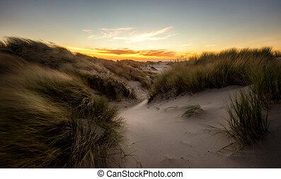Orange sunset above grassy sanddunes