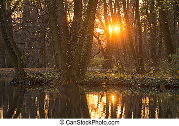 orange sunset in forest with lake