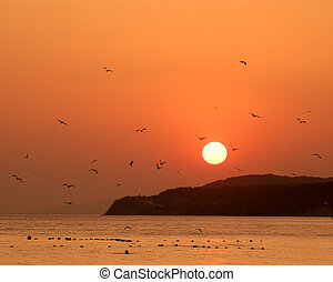 Orange sunset on sea with silhouettes of flying birds