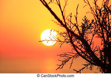 Orange sunset with dark tree silhouette
