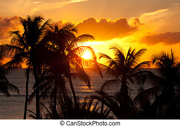 orange sunset with palm trees in caribbean Antigua
