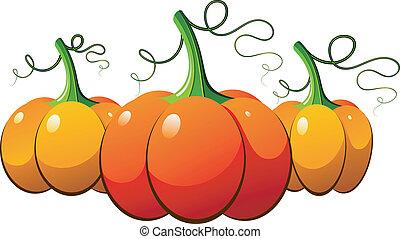 orange, sur, potirons, trois, blanc