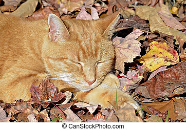 Orange Tabby Cat in Fall Leaves