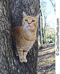 Orange Tabby Cat in Tree